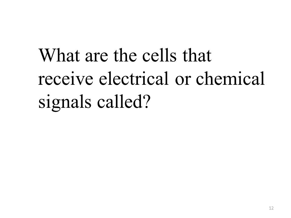 12 What are the cells that receive electrical or chemical signals called