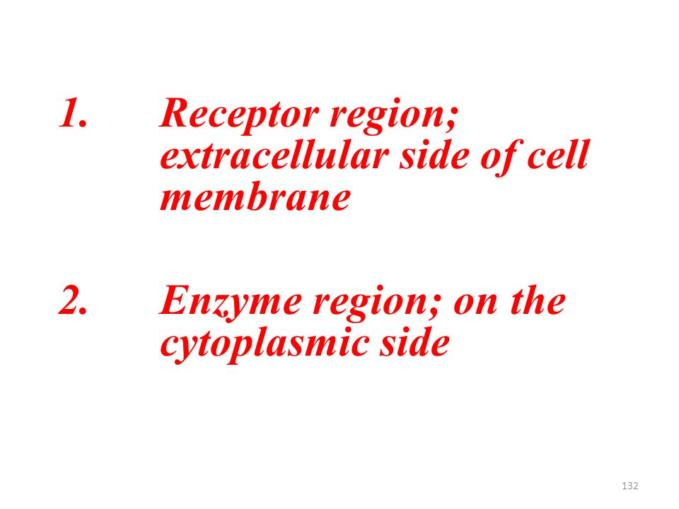 132 1.Receptor region; extracellular side of cell membrane 2.Enzyme region; on the cytoplasmic side