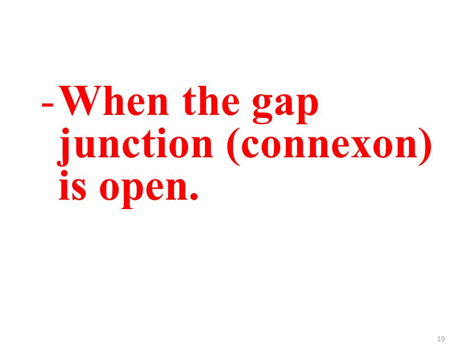 19 -When the gap junction (connexon) is open.