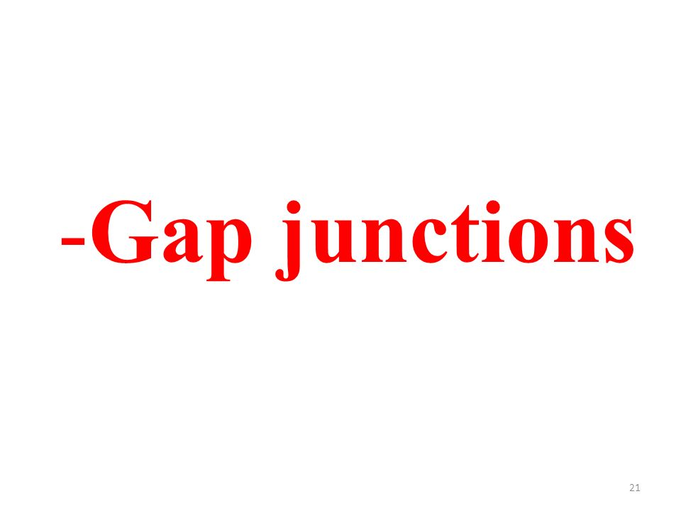 21 -Gap junctions