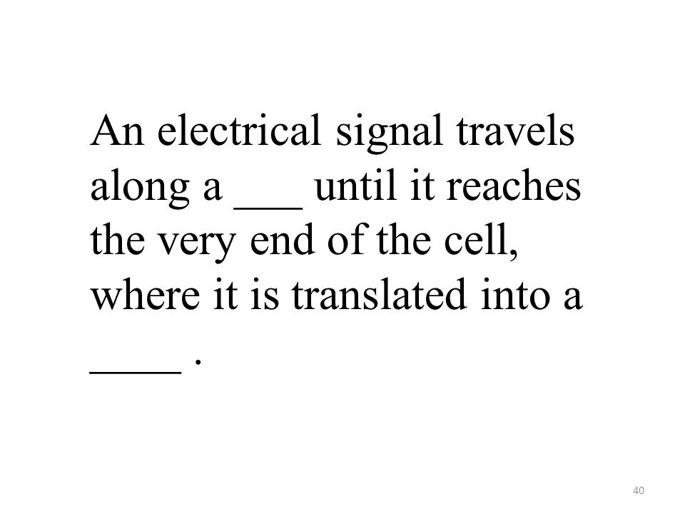 40 An electrical signal travels along a ___ until it reaches the very end of the cell, where it is translated into a ____.