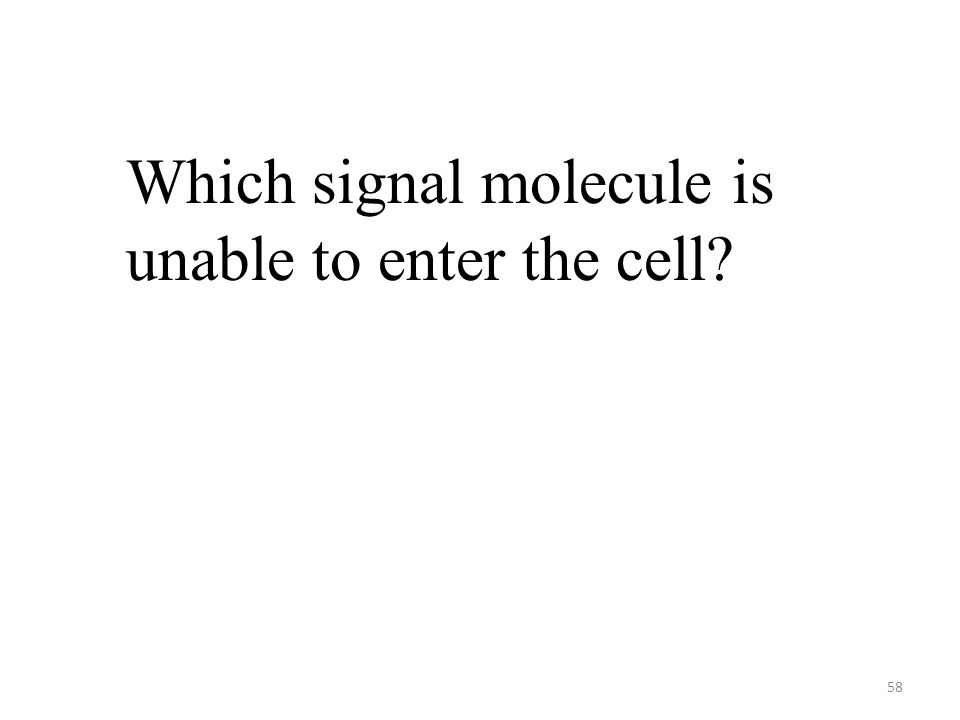 58 Which signal molecule is unable to enter the cell