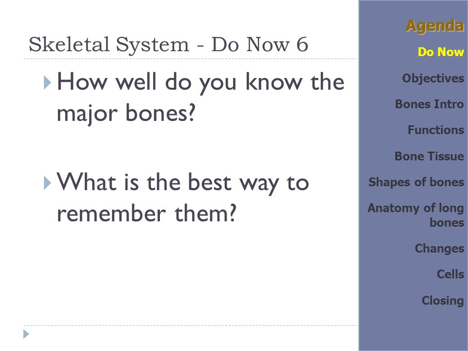 Do Now 2  List at least 3 major functions of the skeletal system ...