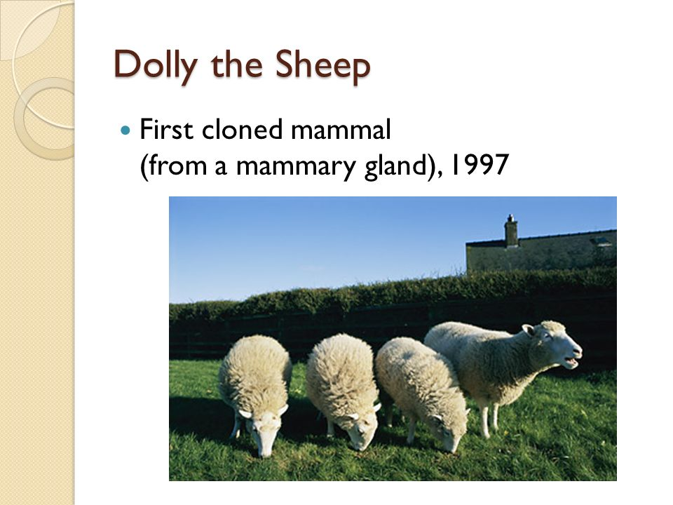 Dolly the Sheep First cloned mammal (from a mammary gland), 1997