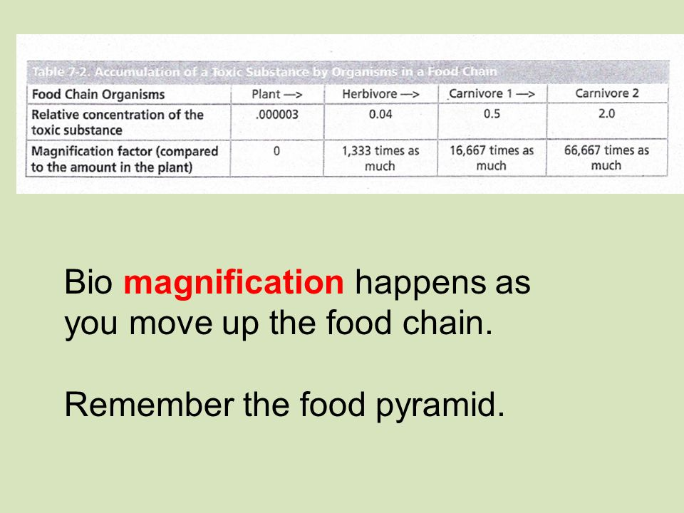 Bio magnification happens as you move up the food chain. Remember the food pyramid.