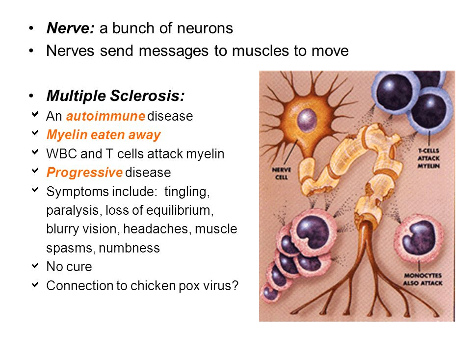 Nervous System Aids in response (reaction) to an outside