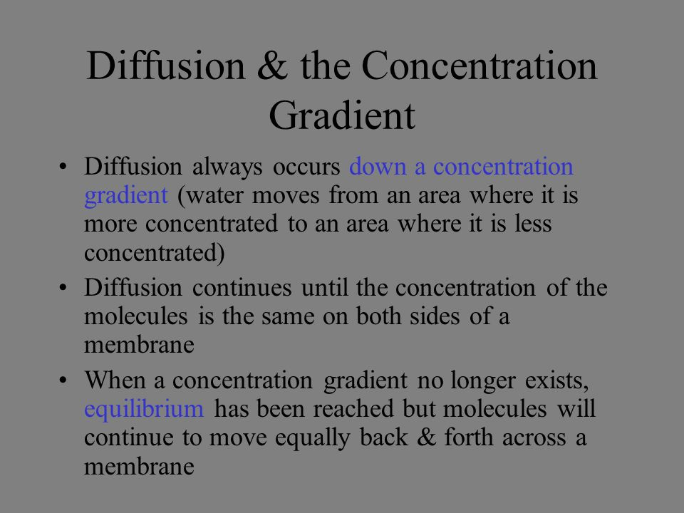 Diffusion & the Concentration Gradient Diffusion always occurs down a concentration gradient (water moves from an area where it is more concentrated to an area where it is less concentrated) Diffusion continues until the concentration of the molecules is the same on both sides of a membrane When a concentration gradient no longer exists, equilibrium has been reached but molecules will continue to move equally back & forth across a membrane