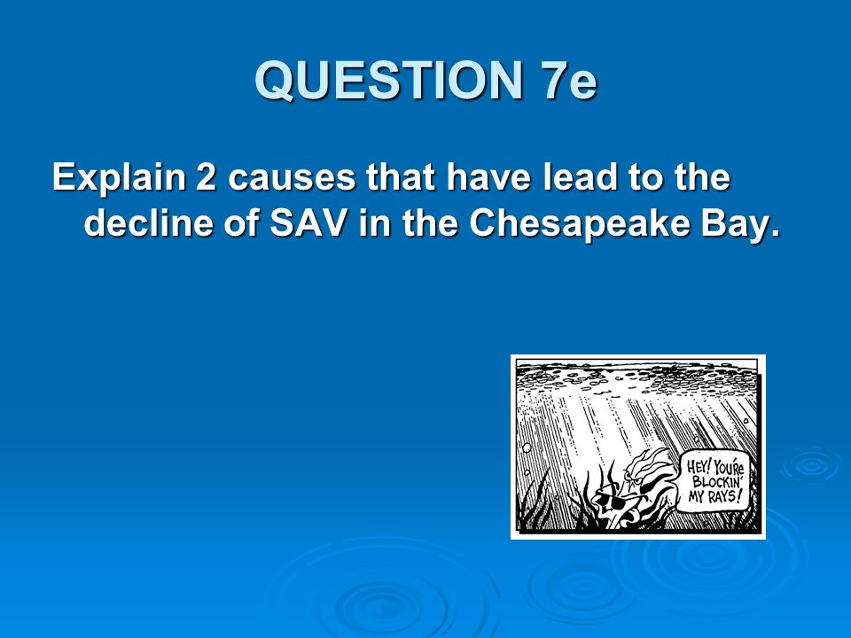 QUESTION 7e Explain 2 causes that have lead to the decline of SAV in the Chesapeake Bay.