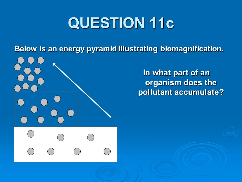 QUESTION 11c Below is an energy pyramid illustrating biomagnification.
