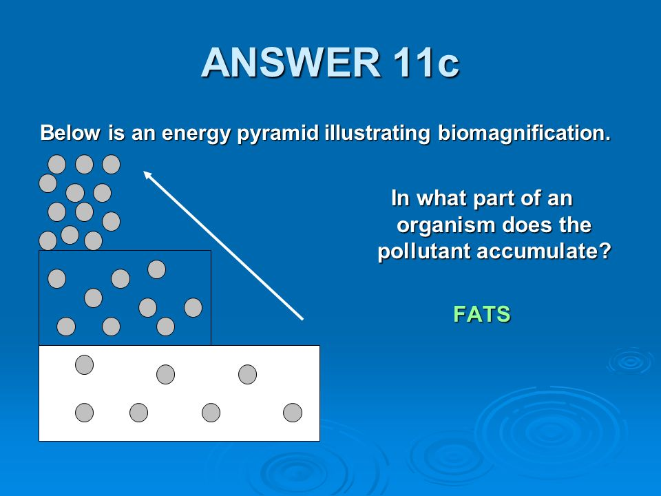 ANSWER 11c Below is an energy pyramid illustrating biomagnification.
