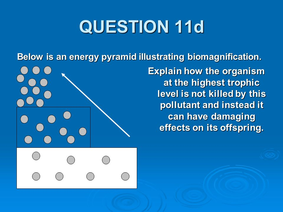 QUESTION 11d Below is an energy pyramid illustrating biomagnification.