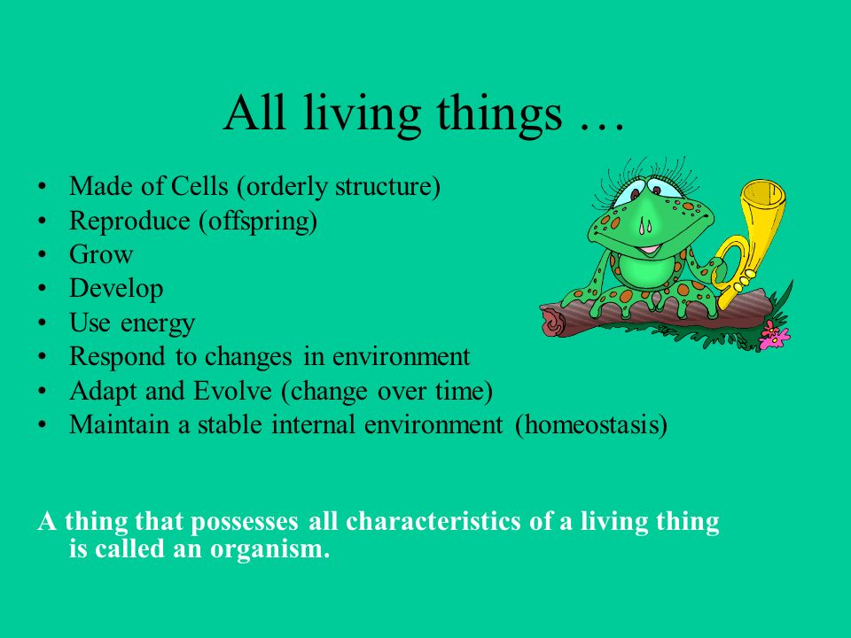 All living things … Made of Cells (orderly structure) Reproduce (offspring) Grow Develop Use energy Respond to changes in environment Adapt and Evolve (change over time) Maintain a stable internal environment (homeostasis) A thing that possesses all characteristics of a living thing is called an organism.