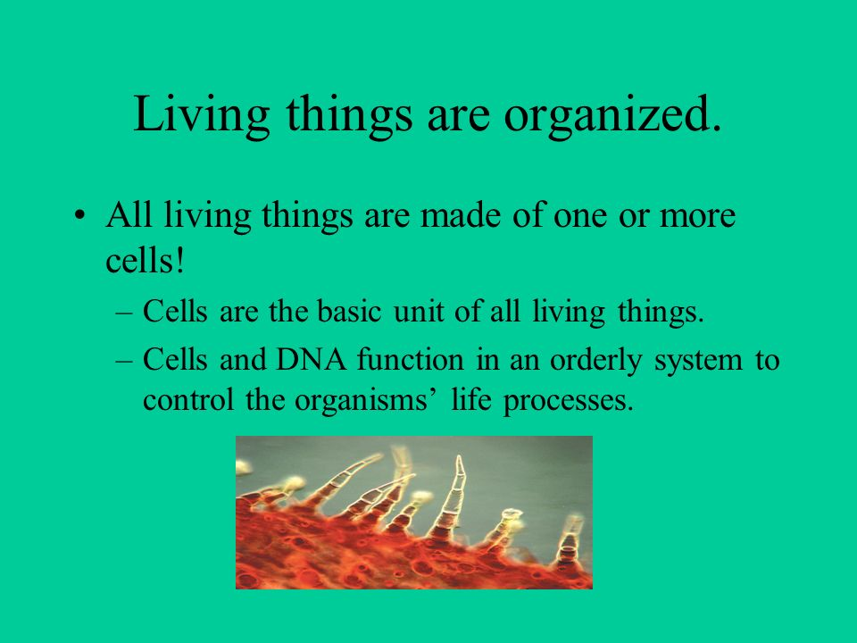 Living things are organized. All living things are made of one or more cells.