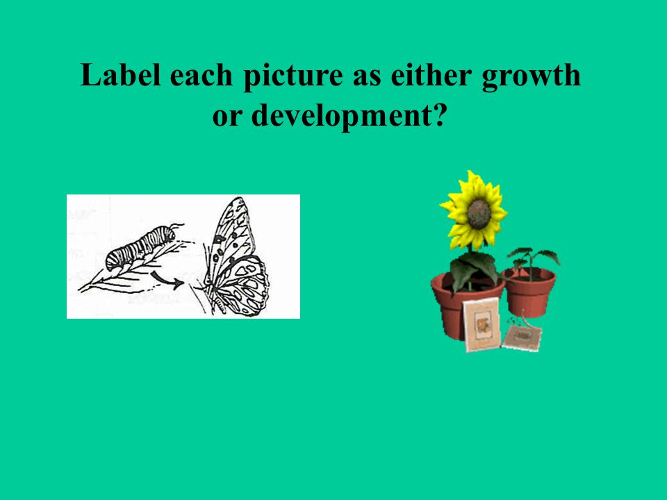 Label each picture as either growth or development
