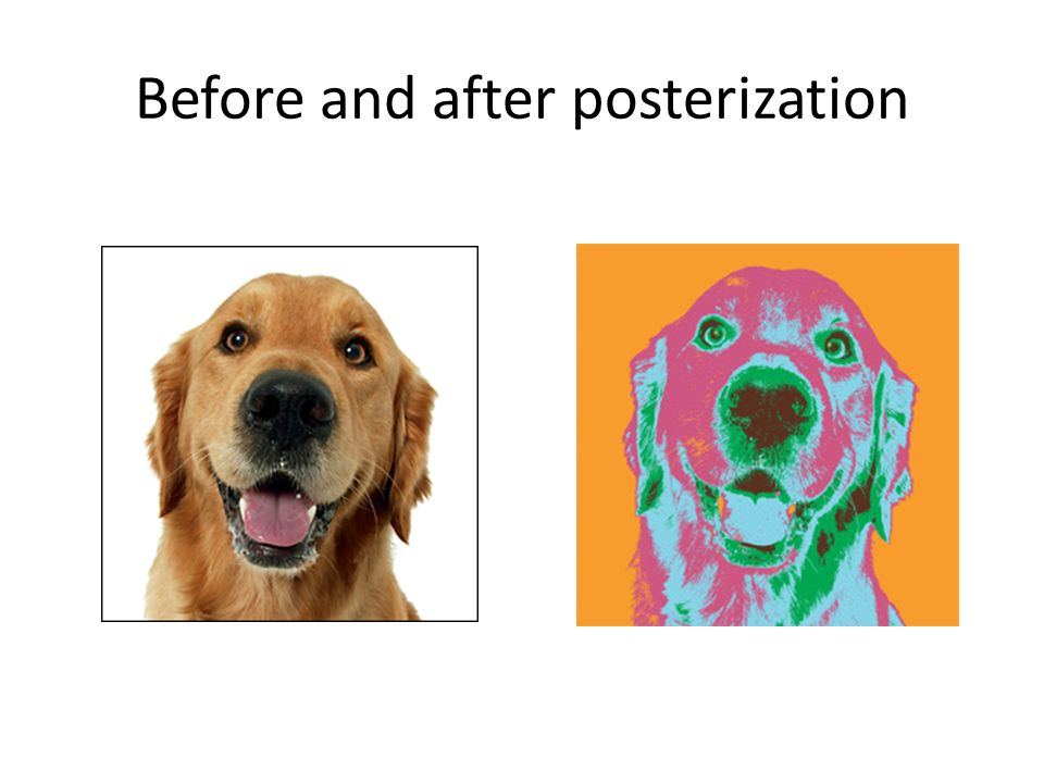 Posterized Portraits  posterize Posterizing reduces the many colors