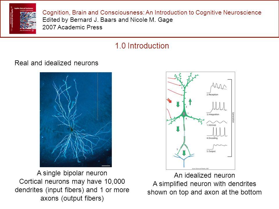 fundamentals of cognitive neuroscience gage nicole m baars bernard