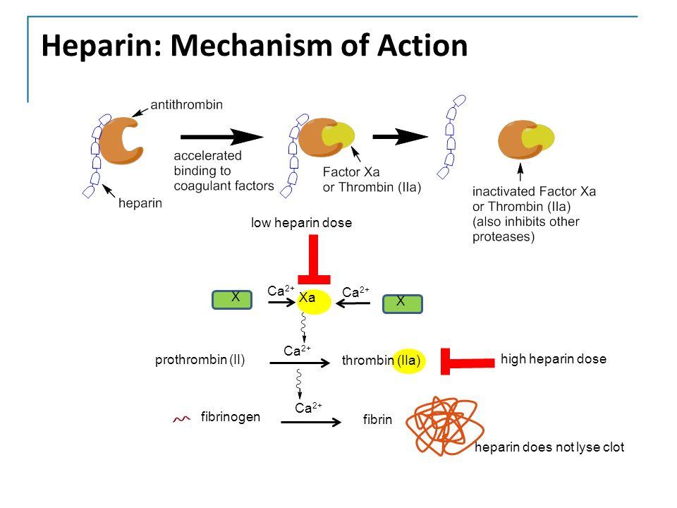 10 Heparin: Mechanism of Action X Xa Ca 2+ X fibrinogen fibrin Ca 2+ prothrombin (II) thrombin (IIa) Ca 2+ low heparin dose high heparin dose heparin does ...