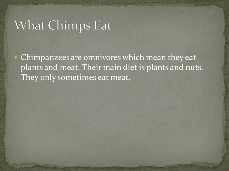 Chimpanzees are omnivores which mean they eat plants and meat.