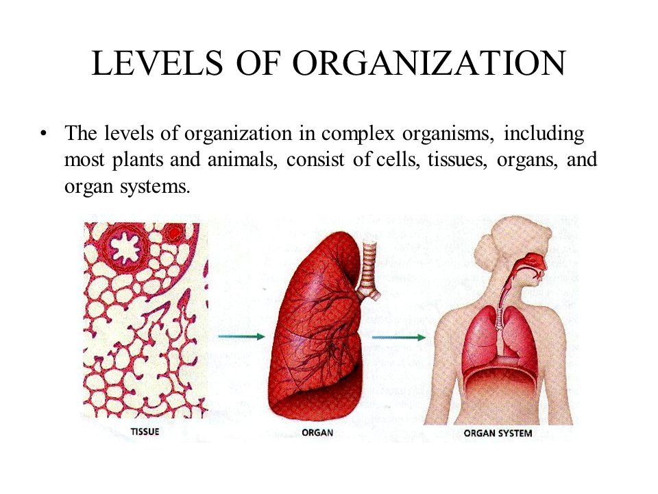 LEVELS OF ORGANIZATION The levels of organization in complex organisms, including most plants and animals, consist of cells, tissues, organs, and organ systems.