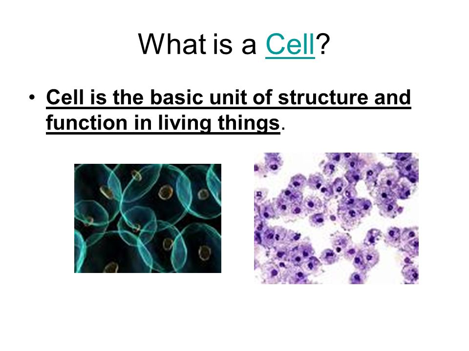What is a Cell Cell Cell is the basic unit of structure and function in living things.