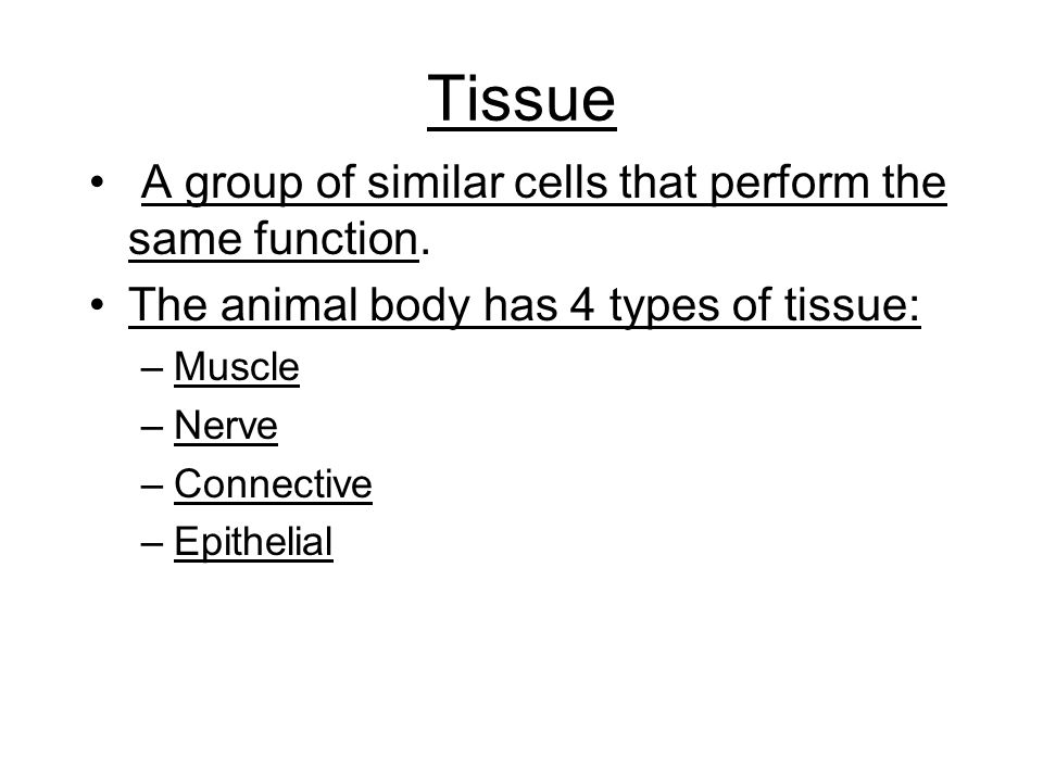 Tissue A group of similar cells that perform the same function.