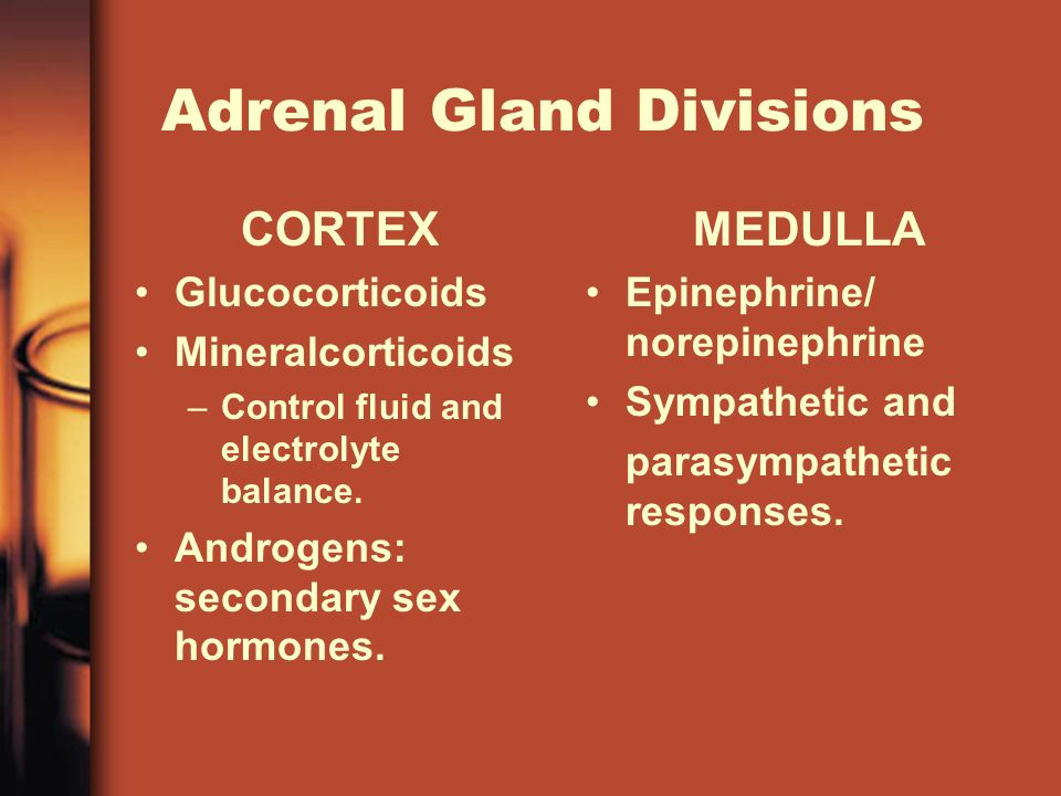 Adrenal Gland Divisions CORTEX Glucocorticoids Mineralcorticoids –Control fluid and electrolyte balance.