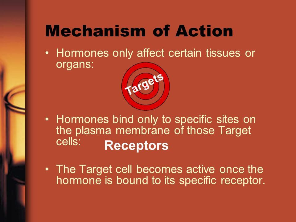 Mechanism of Action Hormones only affect certain tissues or organs: Hormones bind only to specific sites on the plasma membrane of those Target cells: The Target cell becomes active once the hormone is bound to its specific receptor.