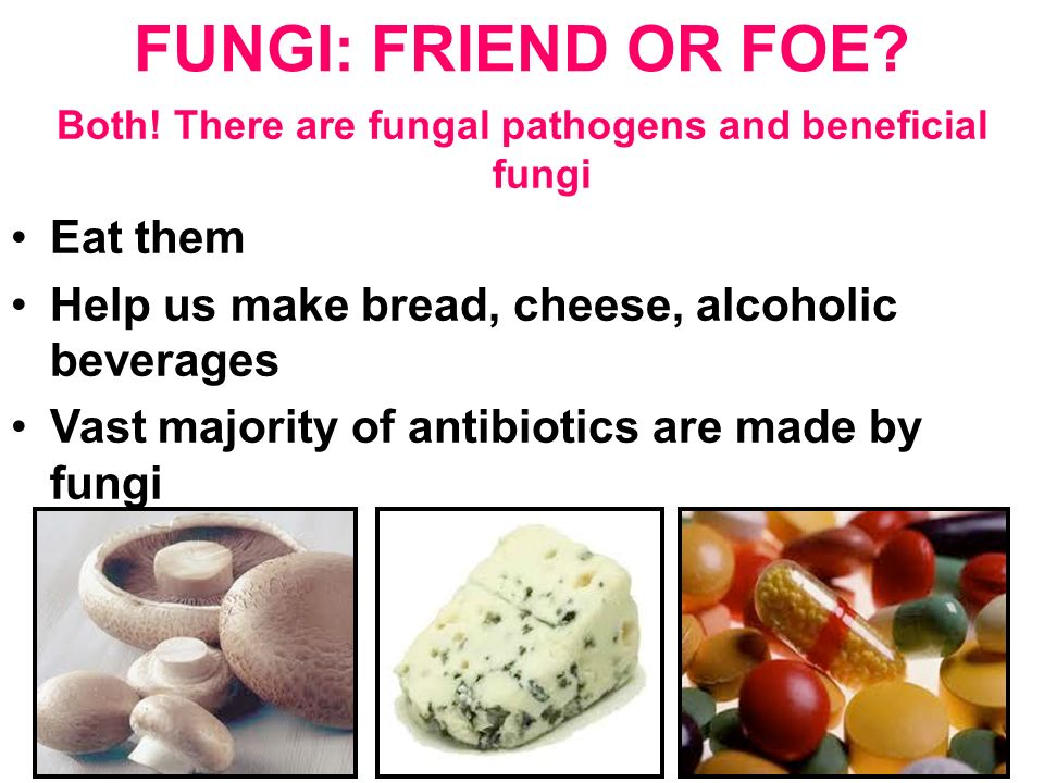 primary fungal pathogens The prevention of wound infection should be a primary management objective for all healthcare practitioners  potential wound pathogens  such as bacteria, fungi, protozoa and viruses, depending on their structure and metabolic capabilities.