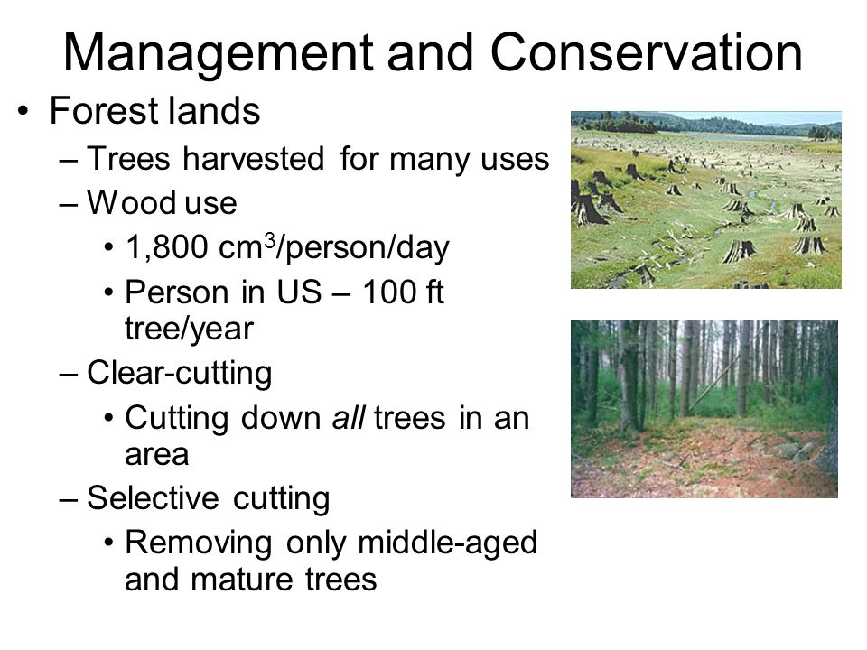 Management and Conservation Forest lands –Trees harvested for many uses –Wood use 1,800 cm 3 /person/day Person in US – 100 ft tree/year –Clear-cutting Cutting down all trees in an area –Selective cutting Removing only middle-aged and mature trees