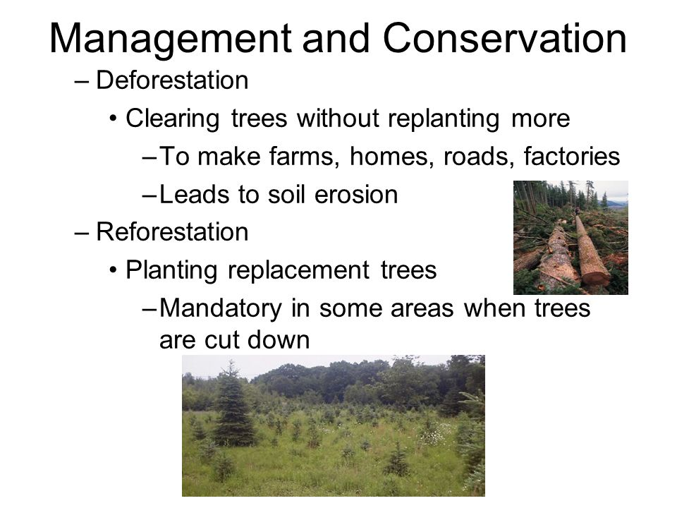 Management and Conservation –Deforestation Clearing trees without replanting more –To make farms, homes, roads, factories –Leads to soil erosion –Reforestation Planting replacement trees –Mandatory in some areas when trees are cut down