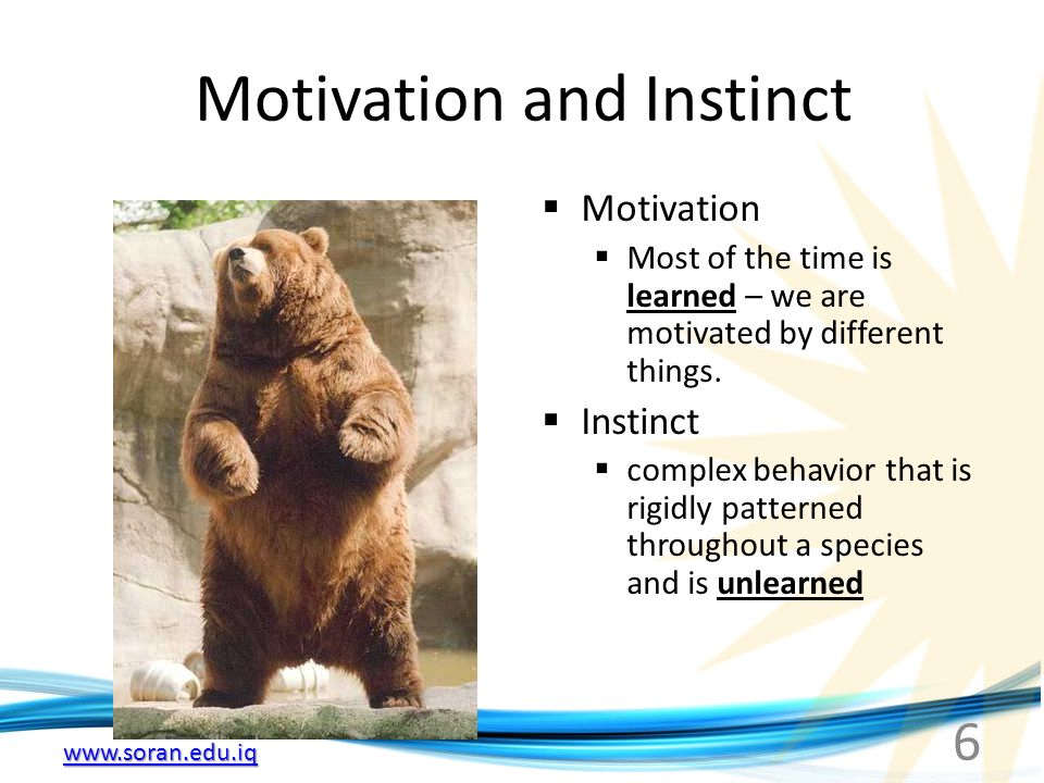 6 Motivation and Instinct  Motivation  Most of the time is learned – we are motivated by different things.