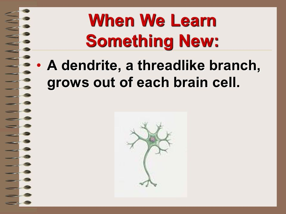 When We Learn Something New: A dendrite, a threadlike branch, grows out of each brain cell.A dendrite, a threadlike branch, grows out of each brain cell.