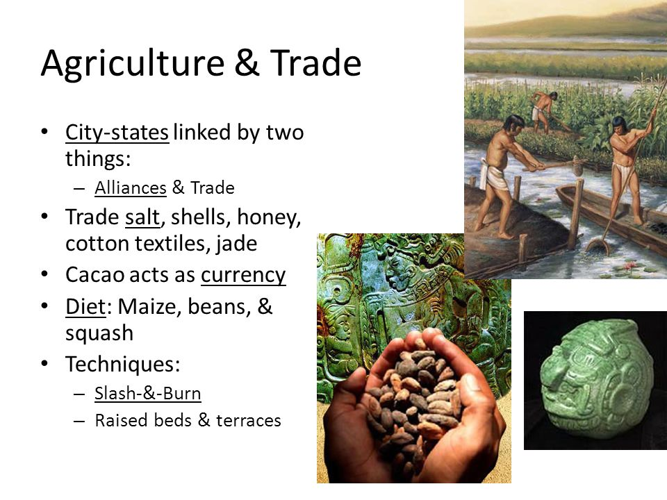 Agriculture & Trade City-states linked by two things: – Alliances & Trade Trade salt, shells, honey, cotton textiles, jade Cacao acts as currency Diet: Maize, beans, & squash Techniques: – Slash-&-Burn – Raised beds & terraces