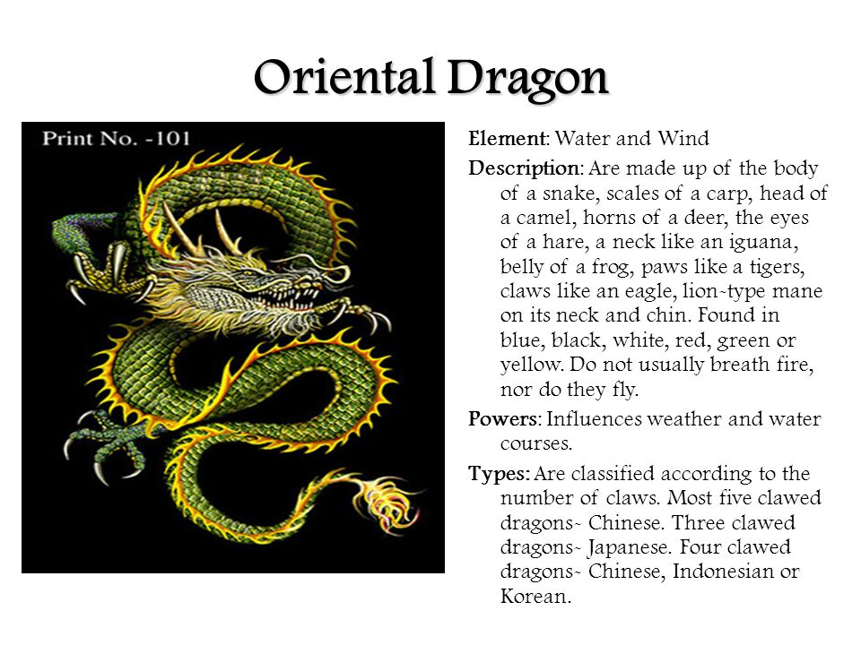 eastern and western dragons