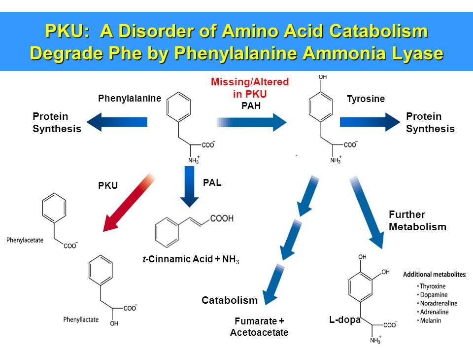 amino acid synthesis and metabolism