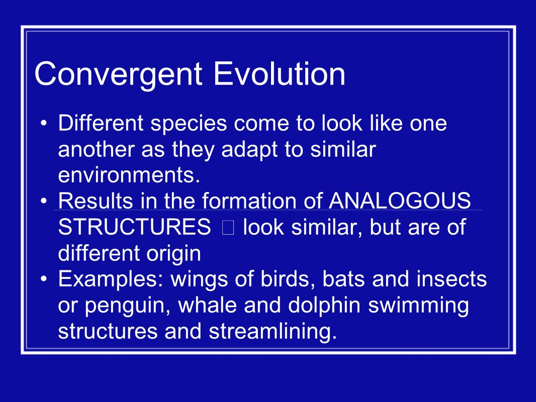 Convergent Evolution Different species come to look like one another as they adapt to similar environments.