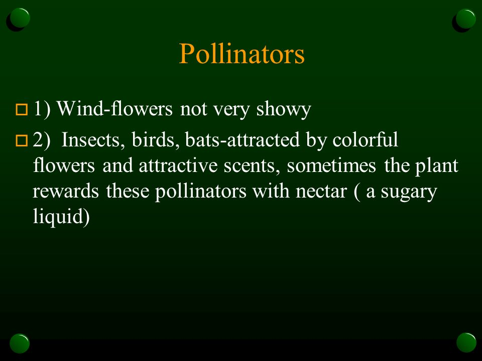 Pollinators o 1) Wind-flowers not very showy o 2) Insects, birds, bats-attracted by colorful flowers and attractive scents, sometimes the plant rewards these pollinators with nectar ( a sugary liquid)