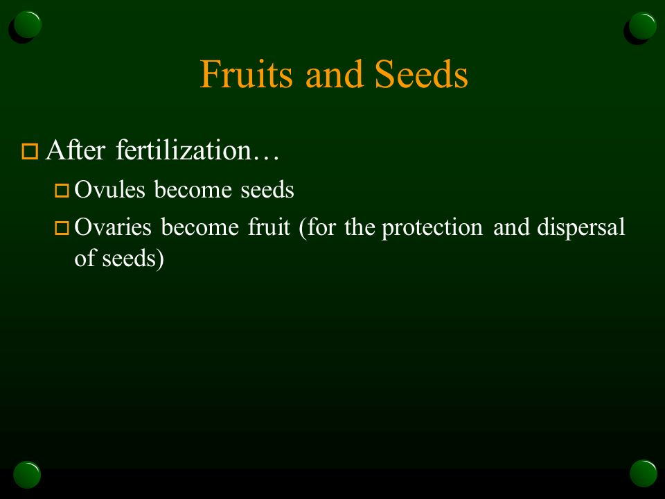 Fruits and Seeds o After fertilization… o Ovules become seeds o Ovaries become fruit (for the protection and dispersal of seeds)