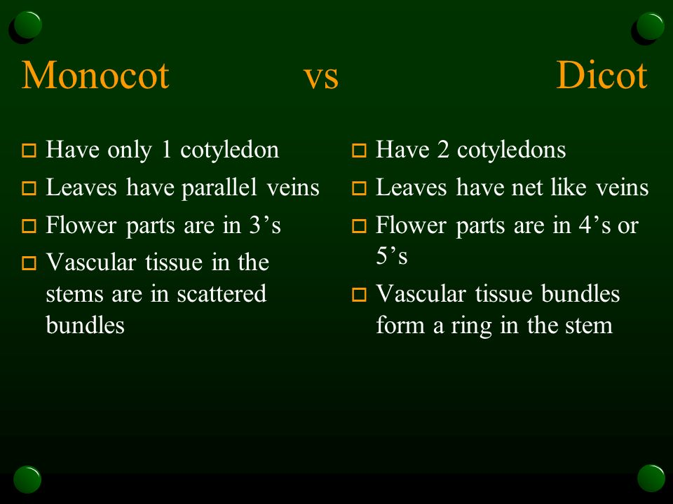 Monocot vs Dicot o Have only 1 cotyledon o Leaves have parallel veins o Flower parts are in 3's o Vascular tissue in the stems are in scattered bundles o Have 2 cotyledons o Leaves have net like veins o Flower parts are in 4's or 5's o Vascular tissue bundles form a ring in the stem