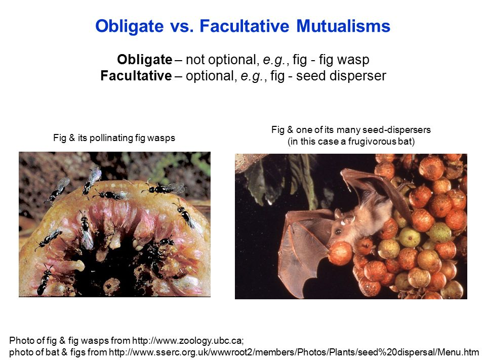 Mutualistic relationships: examples & types video & lesson.