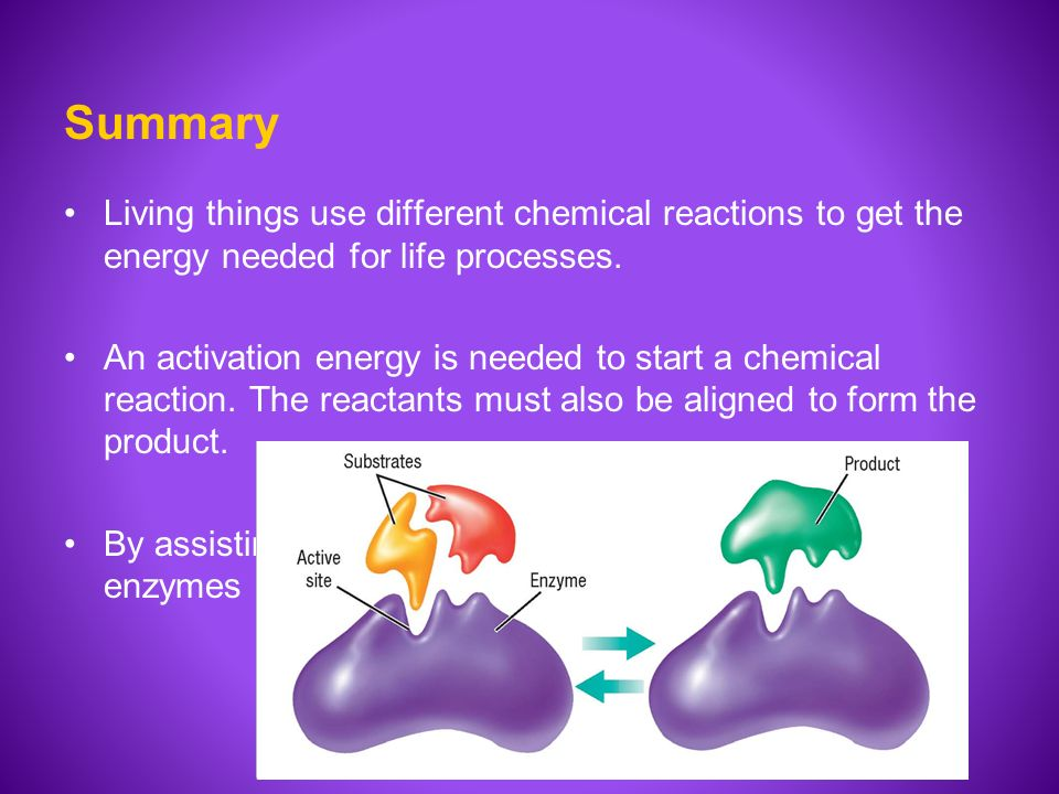 enzymes biology