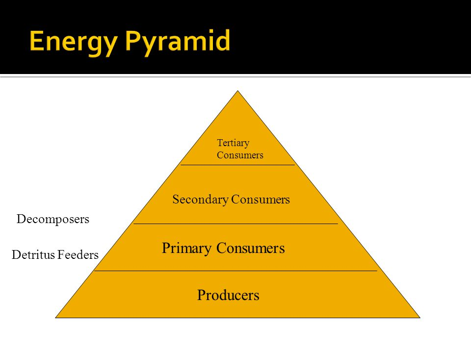 Primary Consumers Producers Detritus Feeders Producers Primary Consumers Secondary Consumers Tertiary Consumers Decomposers
