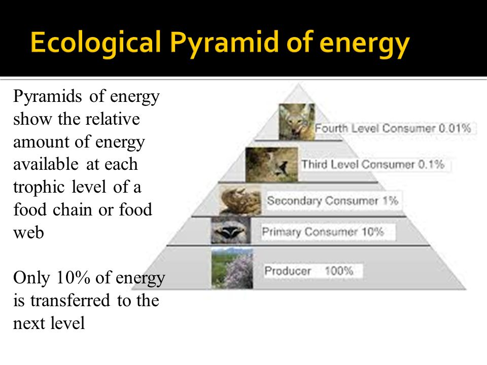 Pyramids of energy show the relative amount of energy available at each trophic level of a food chain or food web Only 10% of energy is transferred to the next level