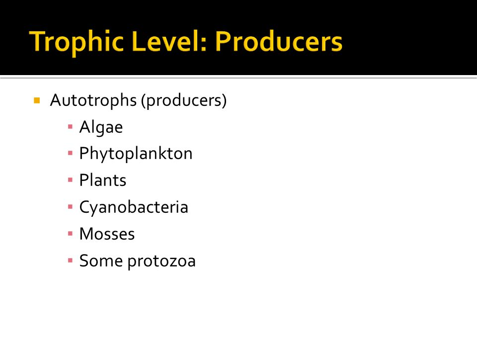  Autotrophs (producers) ▪ Algae ▪ Phytoplankton ▪ Plants ▪ Cyanobacteria ▪ Mosses ▪ Some protozoa