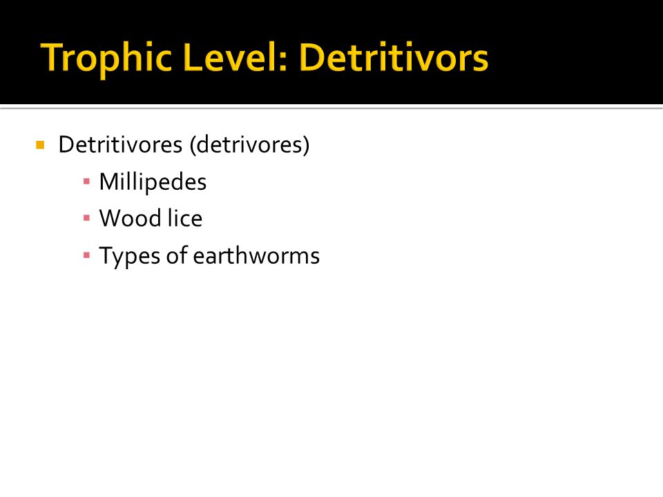  Detritivores (detrivores) ▪ Millipedes ▪ Wood lice ▪ Types of earthworms