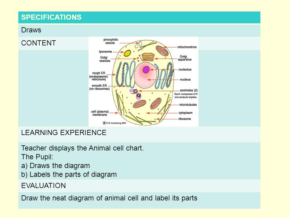 Name of the student teacher a r princi franklina standard x specifications draws content learning experience teacher displays the animal cell chart ccuart Images