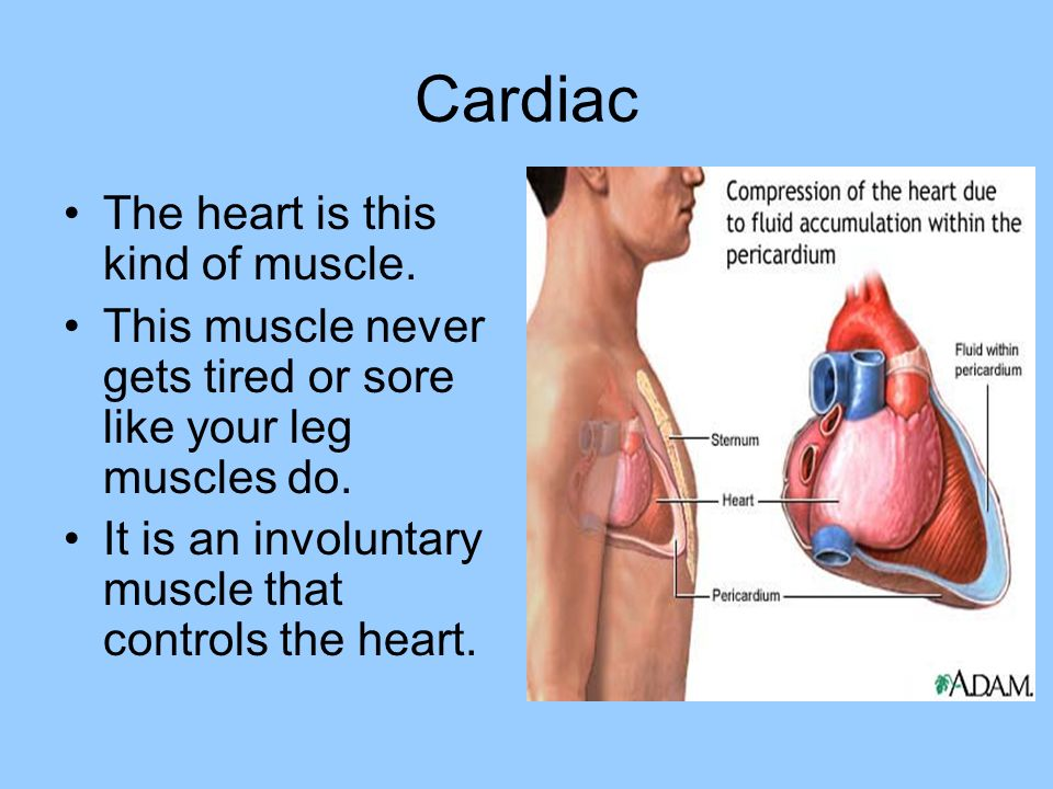 heart and cardiac muscle essay The cardiac muscle makes a huge percentage of the mammalian heart this feature enables the heart perform its primary role with ease and efficiency as an organ whose primary function is to nourish the whole body, unique characteristics distinct to this heart is a necessity.