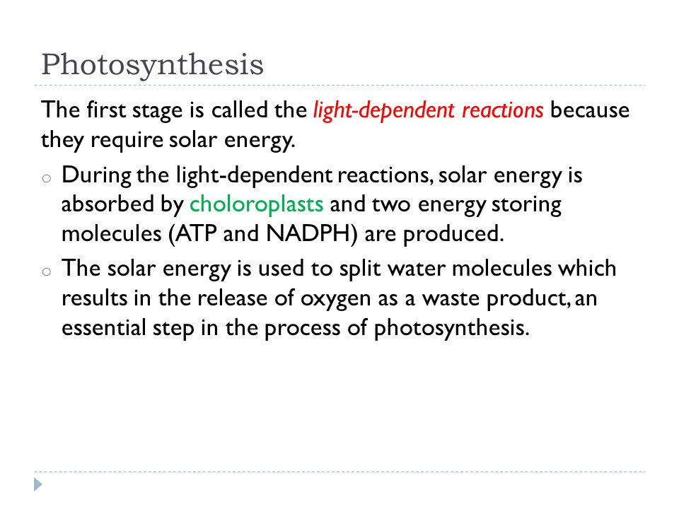Photosynthesis The first stage is called the light-dependent reactions because they require solar energy.