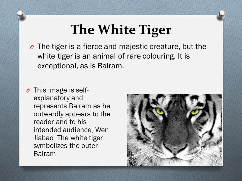 The White Tiger Literary Techniques The White Tiger Symbolism