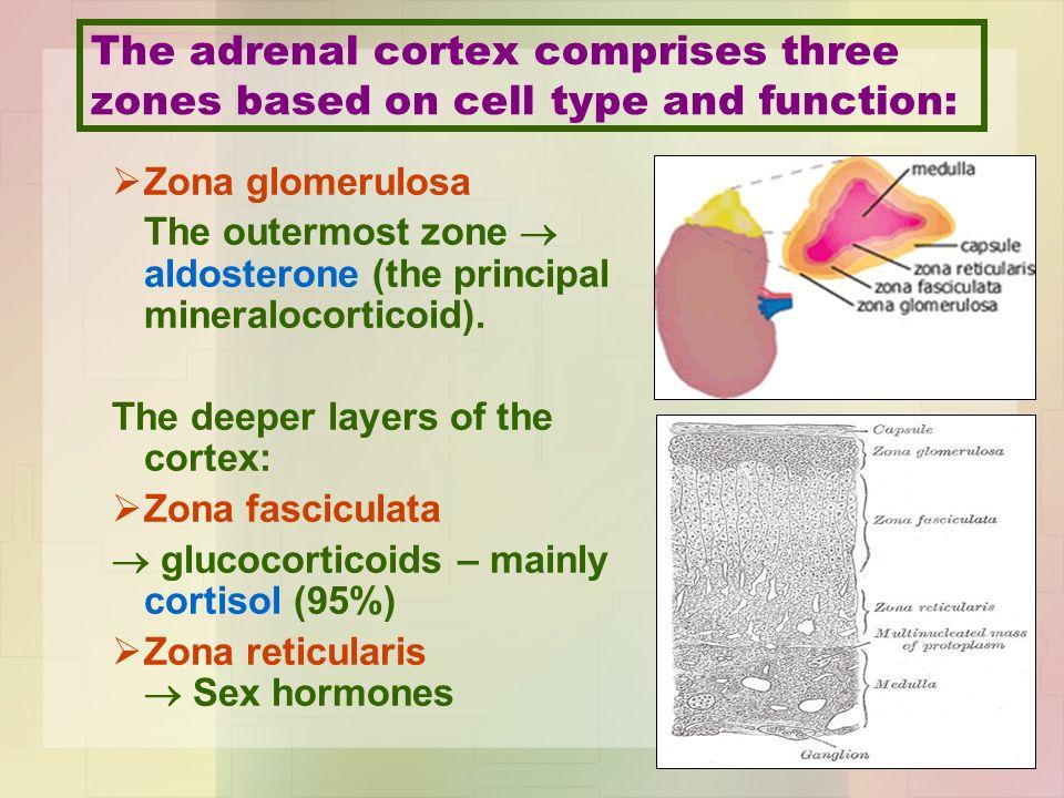 Biochemistry Of Addisons Disease Anatomically The Adrenal Gland